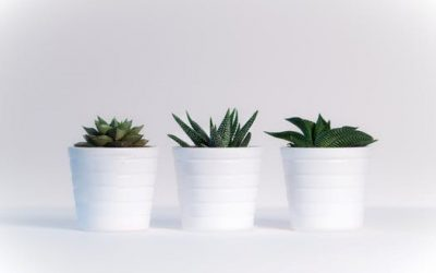 White Vinegar; An environmentally-safe alternative